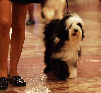 9-12 Month Dog-regular class