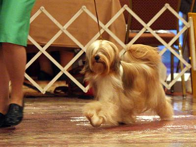 BOB #1 - 1st Group Dogs