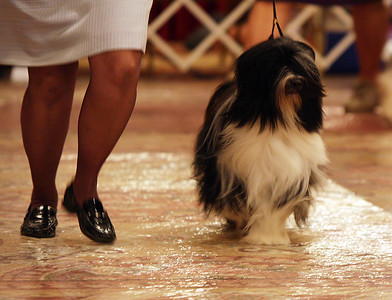 Bred-By-Exhibitor Dog
