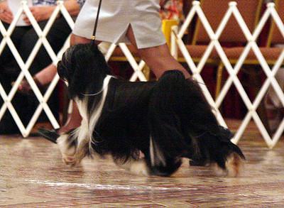 Winners Dog Class