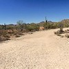 Trail Junction Panorama
