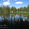 Nymph Lake - Rocky Mountain National Park.