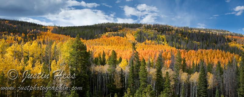 Vibrant Fall Color