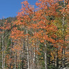 Fall color near Bear Lake.