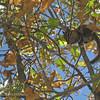 Chipmunk hanging in a bush.