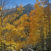 Fall color and Longs Peak.