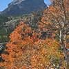 Hallett Peak and fall color.
