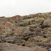 Tundra Bird