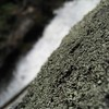 Lichens on a rock.