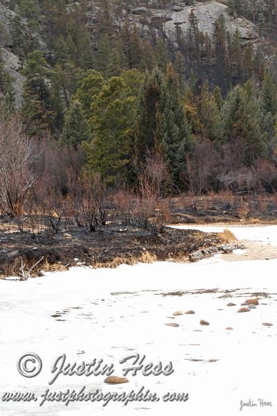 Fire damage along the Big Thompson River near the Cub Lake Trailhead.
