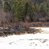 Fire damage along the Big Thompson River near the Cub Lake Trailhead.