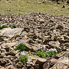 Clusters of Columbine
