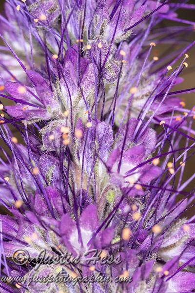 Textures of Purple