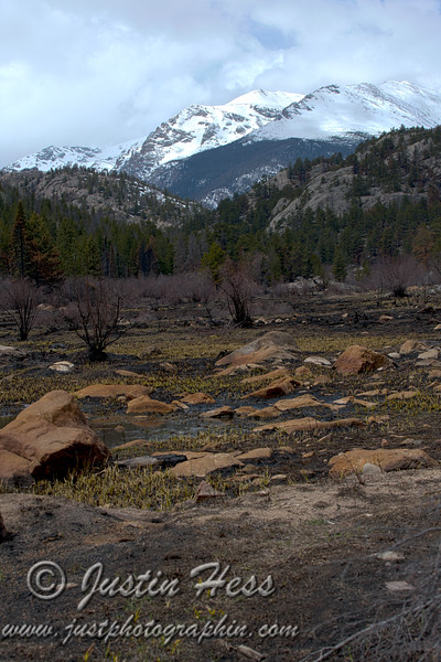 The Fern Lake Fire area along the Cub Lake trail is already growing back. *HDR