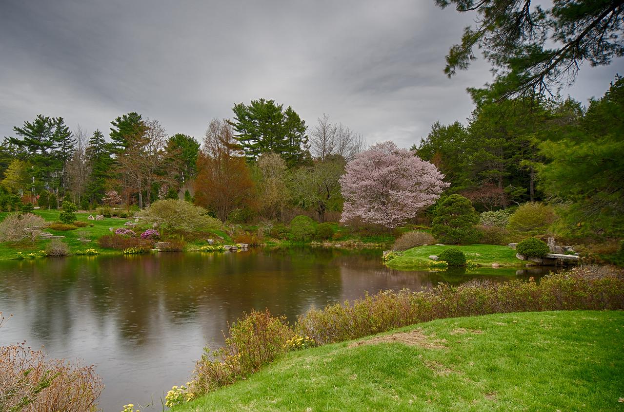 Asticou Azalea Garden, Acadia