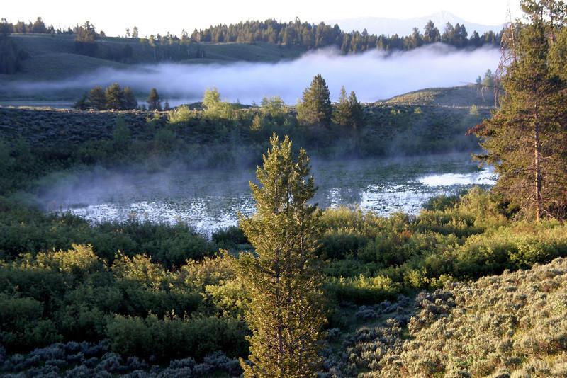 Jackson Lake Lodge Meadow in Fog