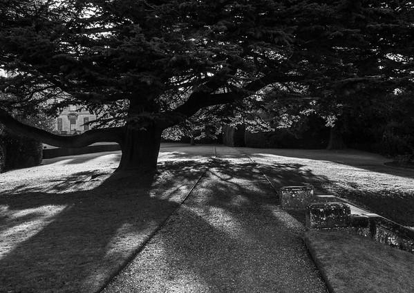 Old Spreading tree