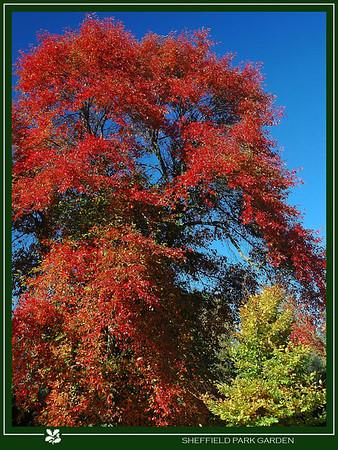 Sheffield Park Garden,Sussex