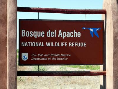 Bosque del Apache, New Mexico