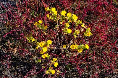 Yellow_Flowers_RAW8570