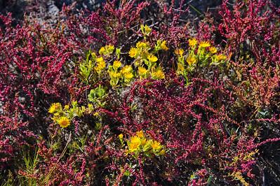 Yellow_Flowers_RAW8569