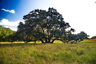 Brazos_Bend_Tree_RAW8572