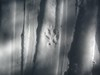A wolf track on the Rock Lake Ski Trail.