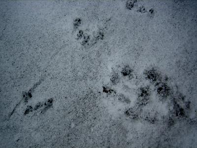 River Otter and Shrew tracks.