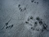 River Otter and Shrew tracks.