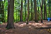 Cathedral of Pines. 20 acres of never cut virgin timber in the Chequamegon-Nicolet National Forest.