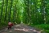 A forest road near Morgan Falls.
