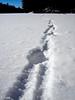 Wolf tracks on Rock Lake.