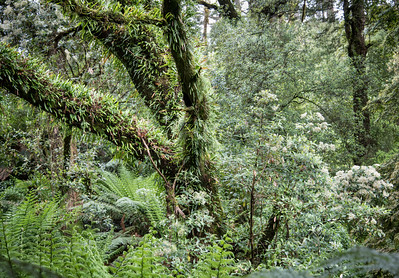 Great Otway National Park - Rainforest