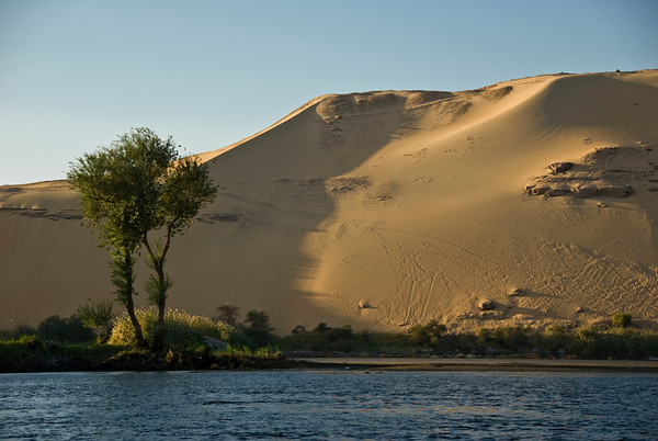 A small island in the Nile River near Luxor, Egypt sprouts a few trees and some small underbrush.   ©Gerald Diamond All rights reserved