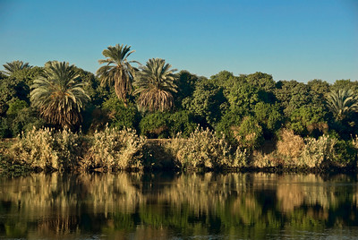 Palms on the lush banks of the Nile River south of Luxor, Egypt.  Just a mile inland the desert begins, dry and windswept for 2,000 miles.  ©Gerald Diamond All rights reserved