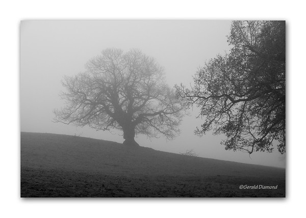 Morning Fog, Derbyshire, England  ©Gerald Diamond All rights reserved