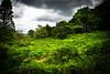 Glendalough, The Wicklows, Ireland