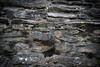 Glenadalough Church Wall, County Wicklow, Ireland