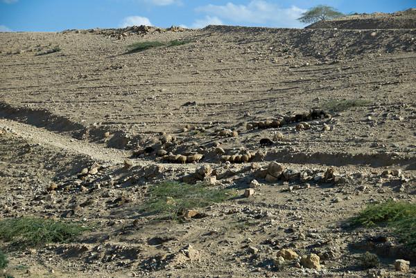 Not Rocks On The Hillside