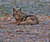 """Coyote Waits."" (title of a Tony Hillerman book.)"