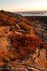 Cadillac Mt dawn, Acadia NP ME (6)