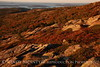 Cadillac Mt dawn, Acadia NP ME (7)