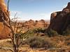 Landscape Arch Trail, ArchesNP UT (6)