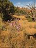 Landscape Arch Trail, ArchesNP UT (4)