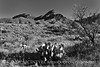 Enroute to Chisos Basin 7 BW