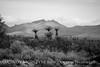 Grapevine Hills Road Yucca BW