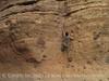 Lower Burro Mesa Pouroff (20)