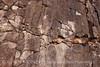 Burro Spr Tr Rock Patterns