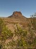 Creosote blooming and Cerro Castalon