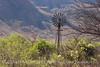 Sam Nail windmill spring